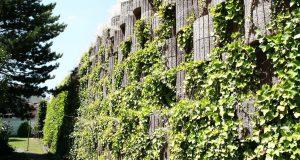 wand bestehen aus betonringe wo pflanzen drin wachsen