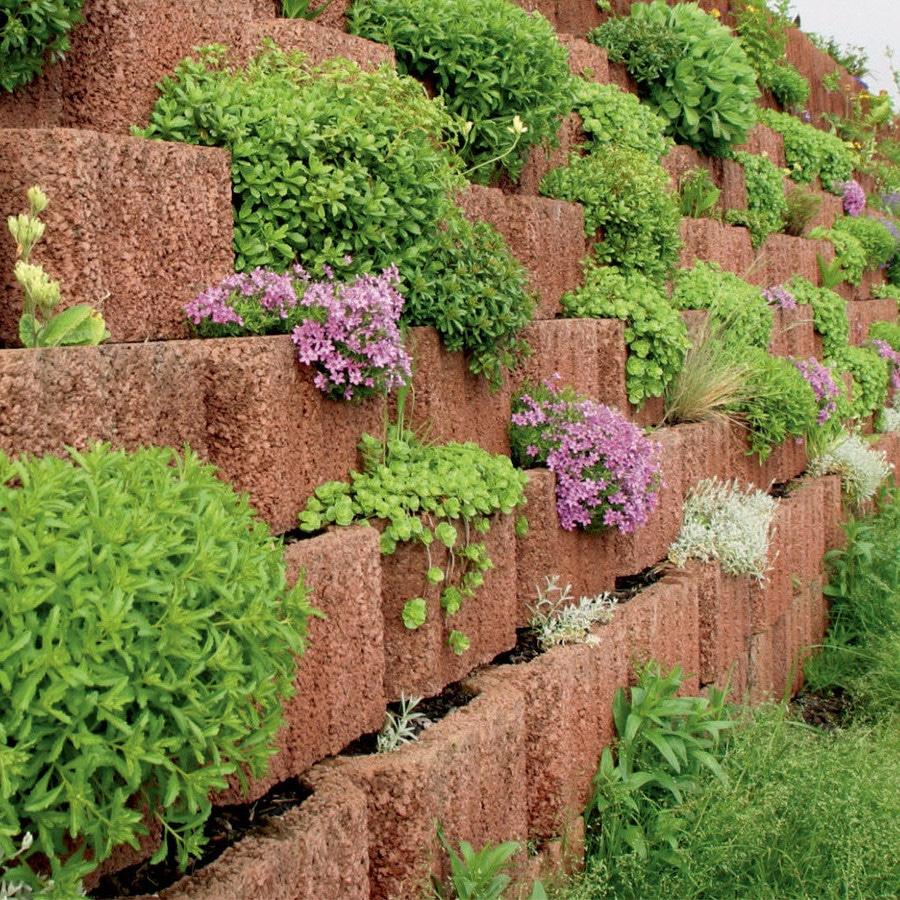 wand mit braunen pflanzenringe erstellt und darin verschiedene pflanzen